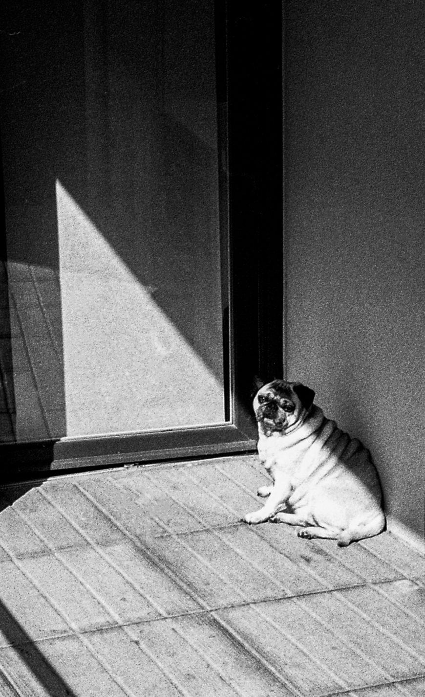 mi ombre