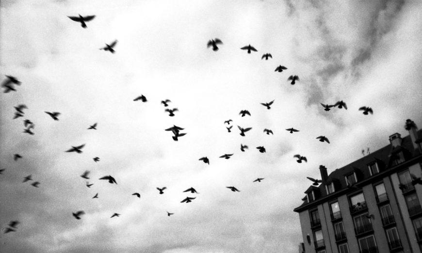 Oiseaux tempête.