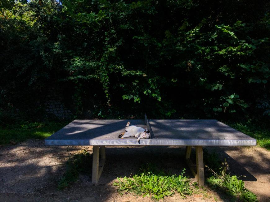 playground cat.